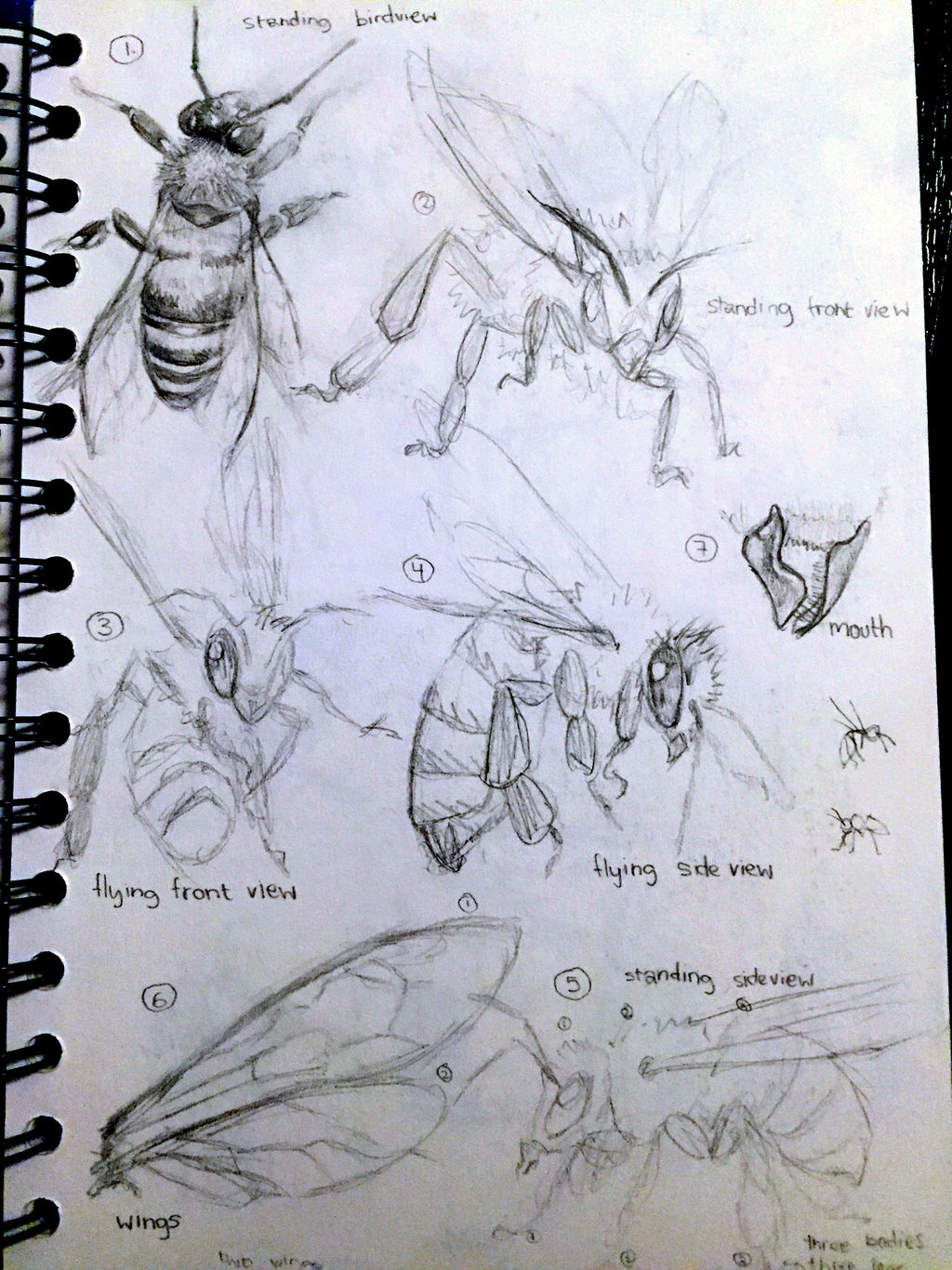 Old wasp studies by Sabinaa