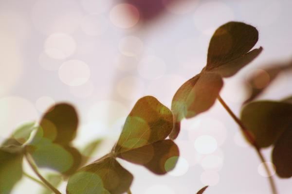 Green bokeh by PoetBanana