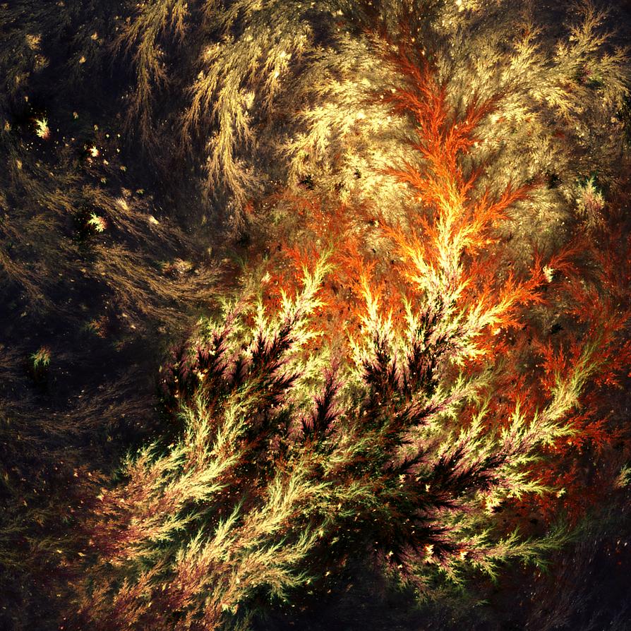 Acacia by JanRobbe