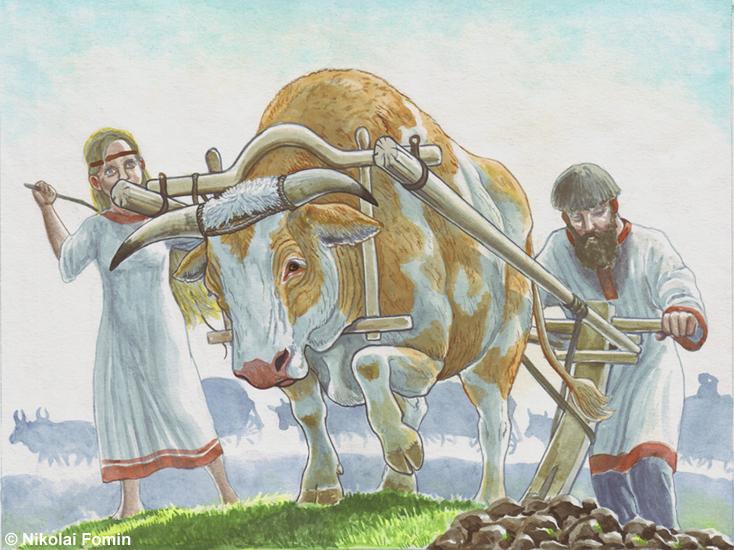 Oxen by Nikkolainen