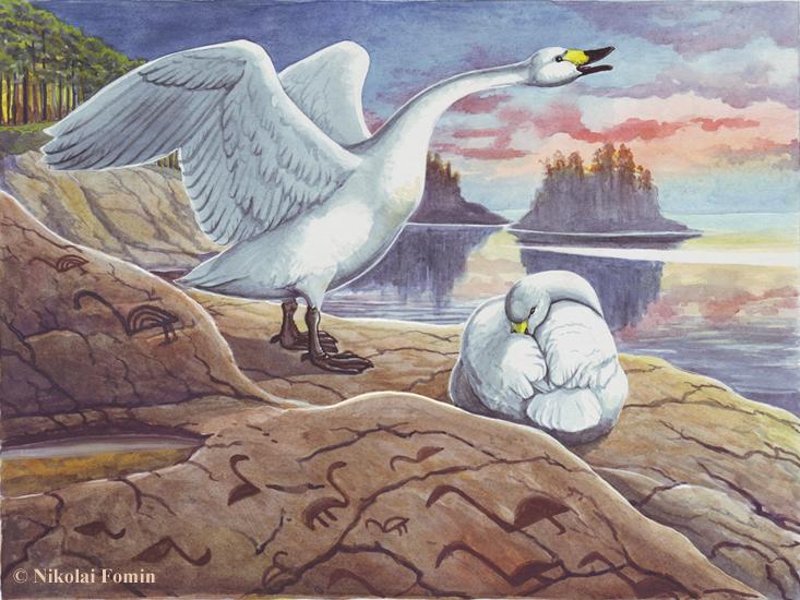 Swans. by Nikkolainen