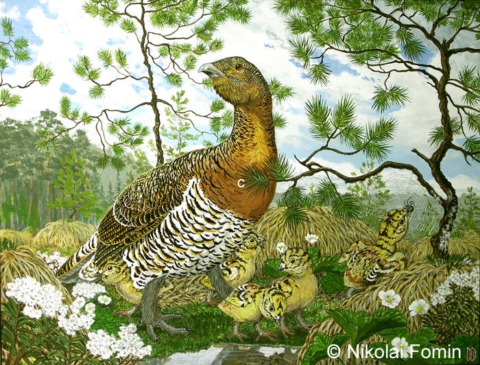 A caprcailie hen is a vigilant mother. by Nikkolainen
