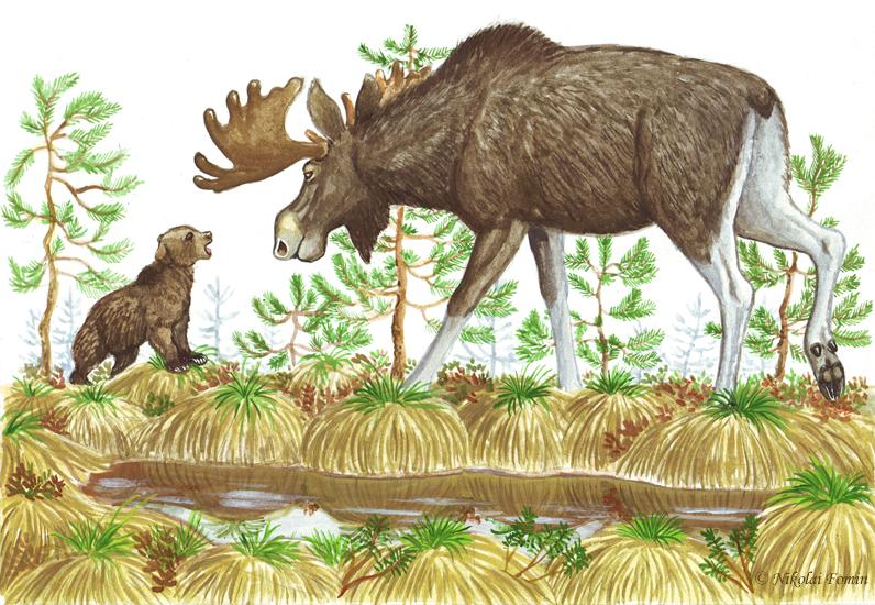 Topotok, the bear cub. Meeting an elk. by Nikkolainen
