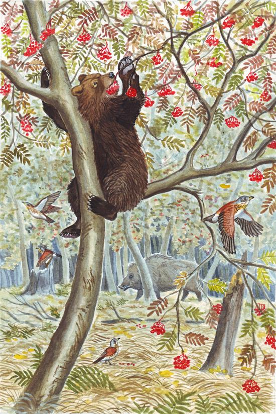Topotok, the bear cub. Ashberries. by Nikkolainen