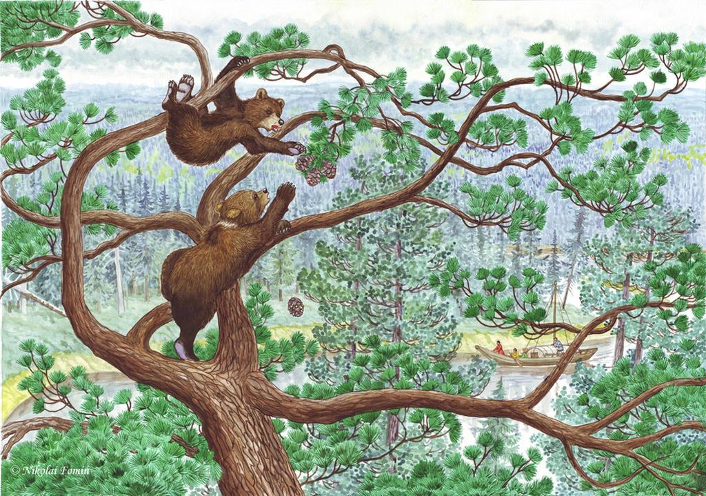 Machenkat. Bear cubs. by Nikkolainen