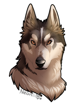 Post Con Commission: Husky