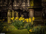 Yellow Blooms and Green Mossy Graves