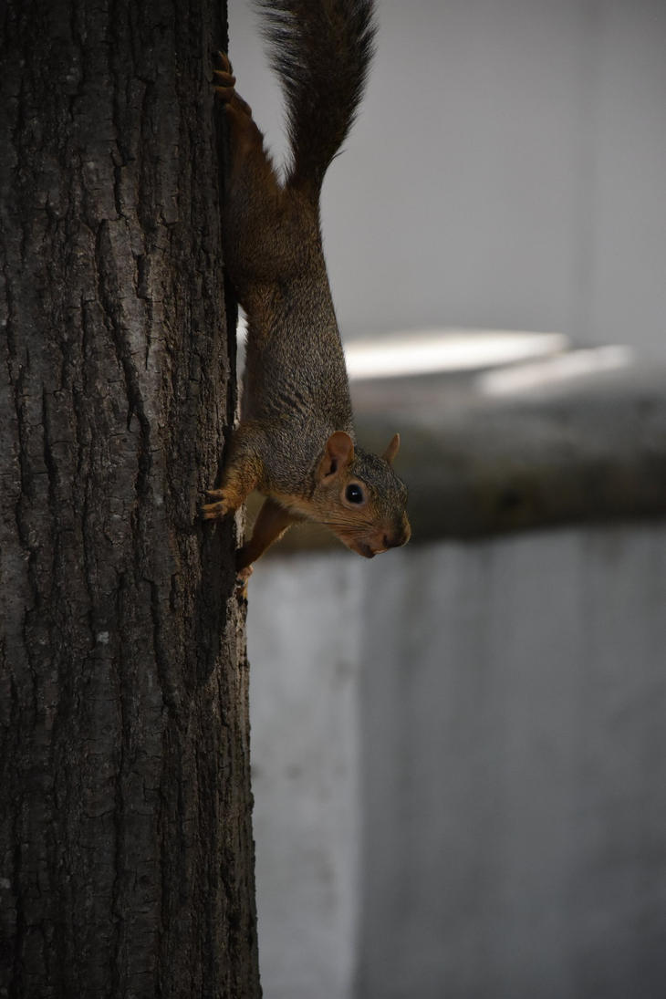 Squirrel by sisikey