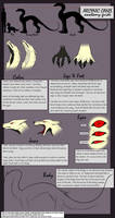 Arcynic Canis Anatomy Guide by soulwithin465