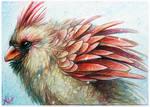 ACEO-Cardinal