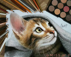Cat Drawing  by missmp1