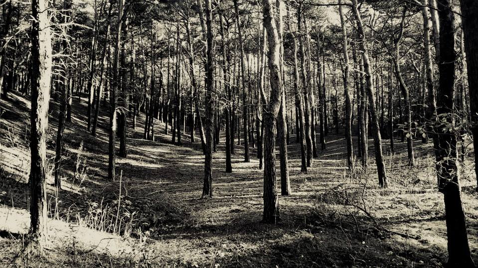 Liverpool Forest by h-hankins
