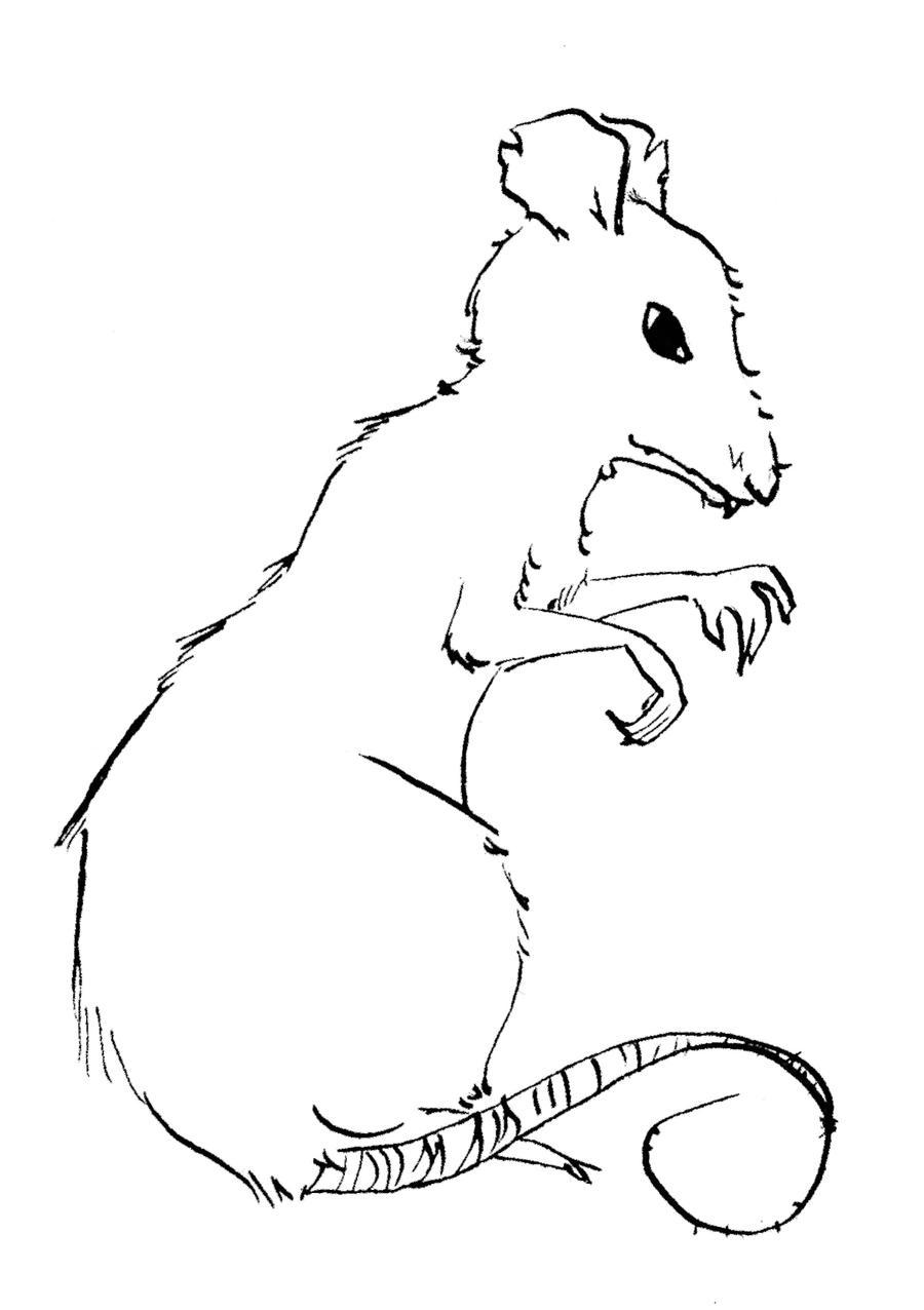 Line Drawing Rat : Rat line art by bunnymastermomiji on deviantart
