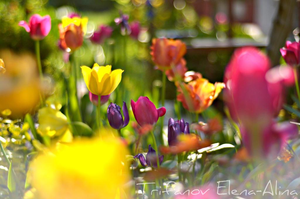 Mom's garden by Elena-Alina