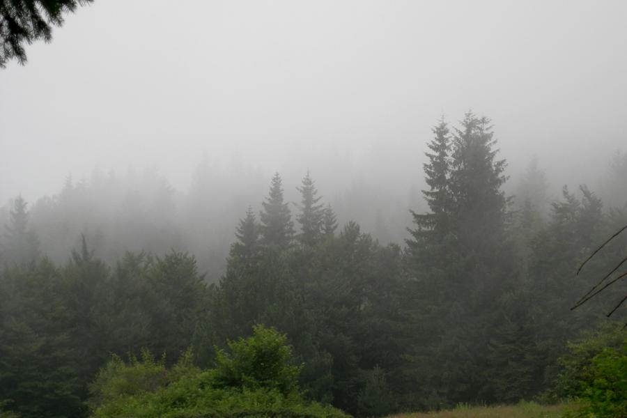 mountain fog Gallery