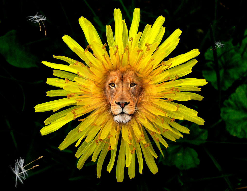 the_dandy_lion_by_earthydove-d6u5g86.jpg