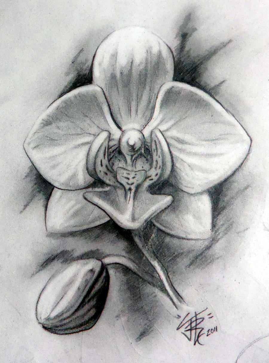 orchid in graphite by sirius tattoo on deviantart. Black Bedroom Furniture Sets. Home Design Ideas