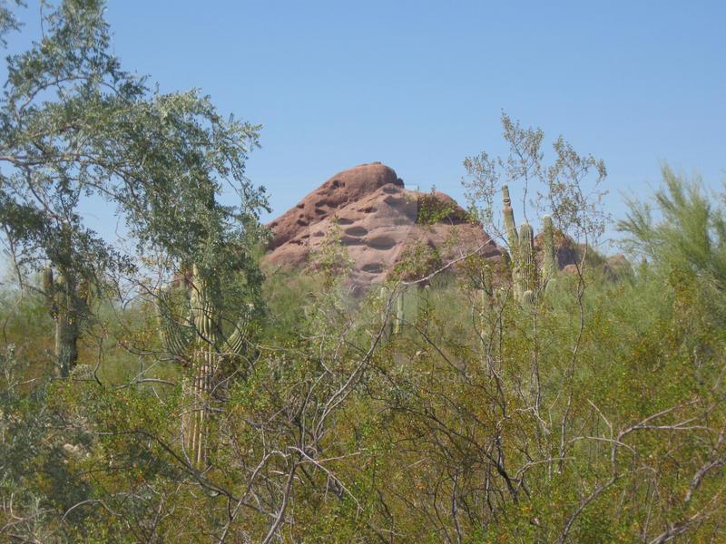 desert botanical garden 3 by lemari on deviantart