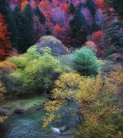 Autumn Colors by kyptanuy