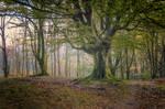 woods-II