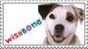 WishBone Stamp