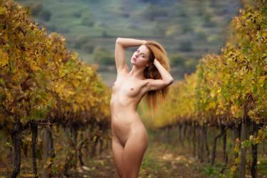 White wine by rodibest