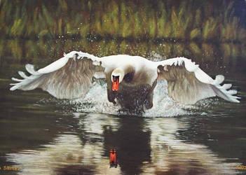 Swan by Artnes80