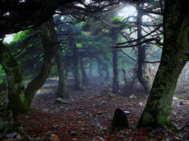 Old forest _updated by shuu2