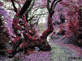 Wonderland 2 by shuu2