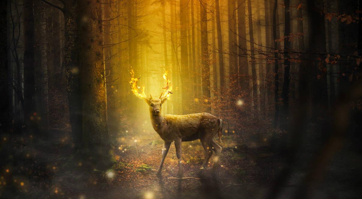 Halloween Forest Wallpaper