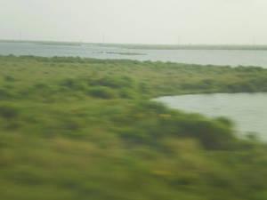 WATPDWMC: Swamp Vista