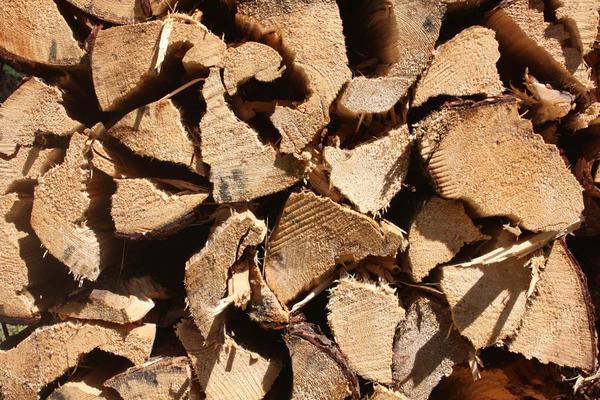 Log pile by Texturegen