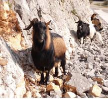 Goats 2 by III-HATHOR-III