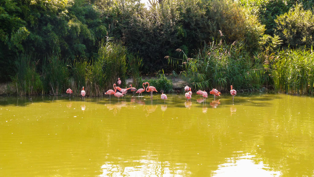 Flamingos 2 by III-HATHOR-III