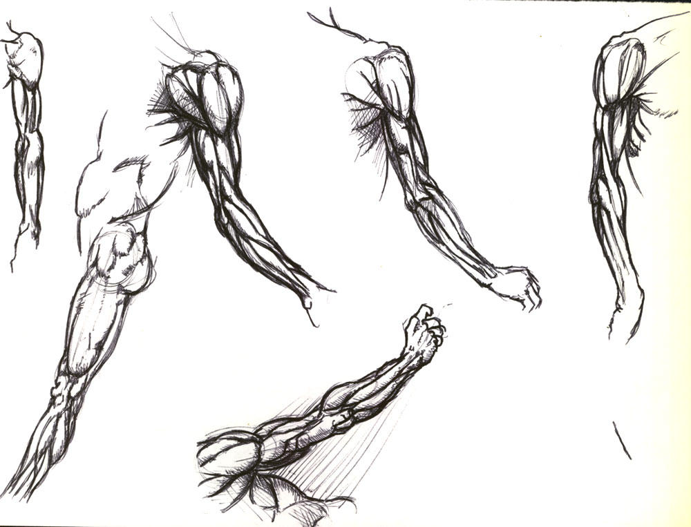 Arm Muscles By Buttzilla On Deviantart