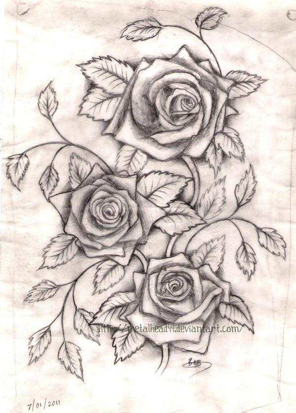 The gallery for three roses tattoo outline for 3 roses tattoo
