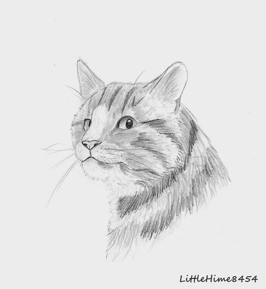 Cat by LittleHime8454