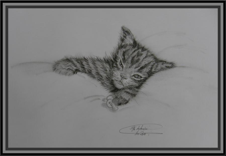 ...cutest kitty... by floriaiglenoir