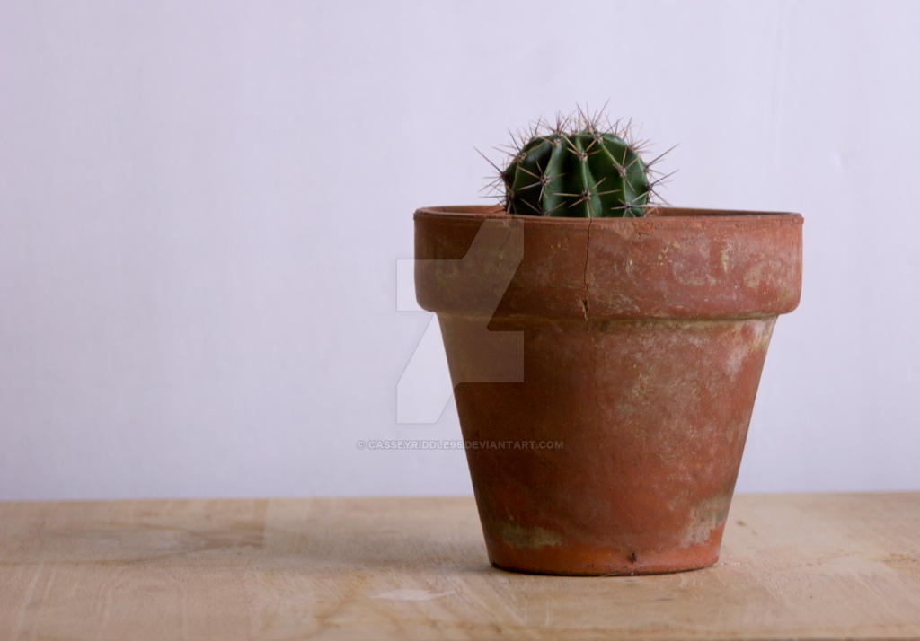 Stock Photography Cactus in Pot by casseyriddle95