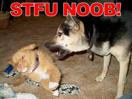 STFU NOOB by NerdSoup
