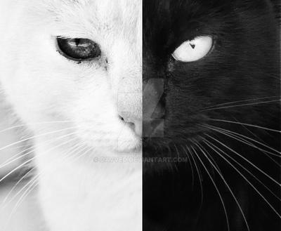 Black and White by Davved