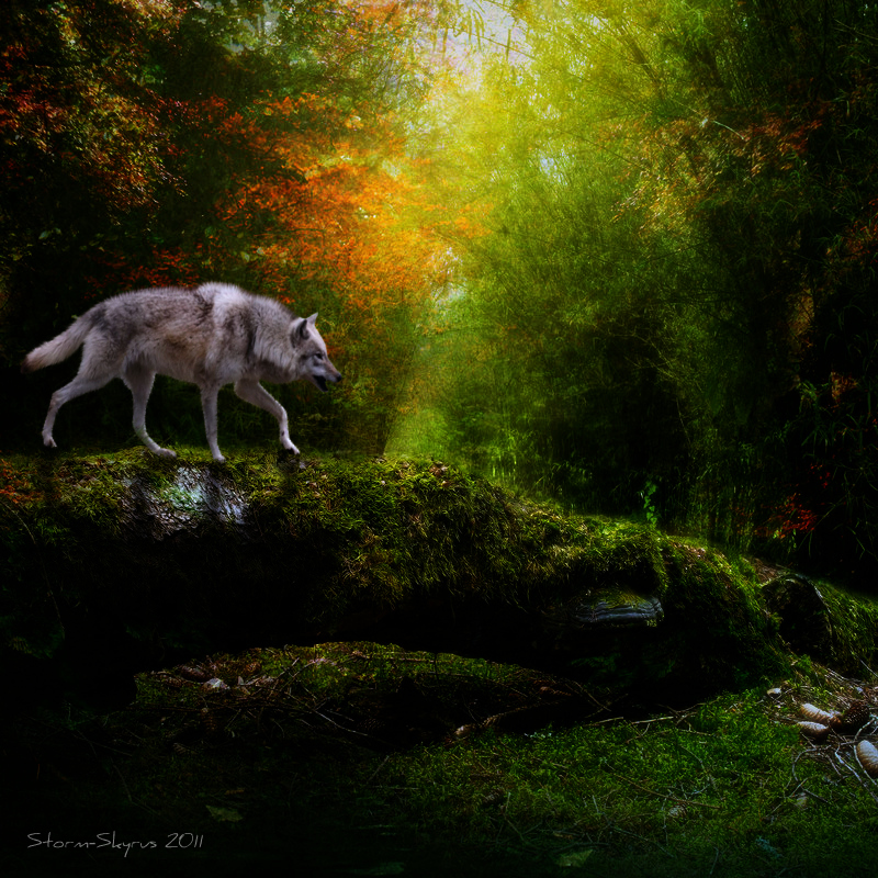 ^ Twilightstars ^ Wolves I_can__t_go_back_by_storm_skyrus-d38swdt