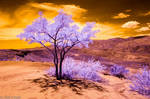 Tree 590 by robpolder