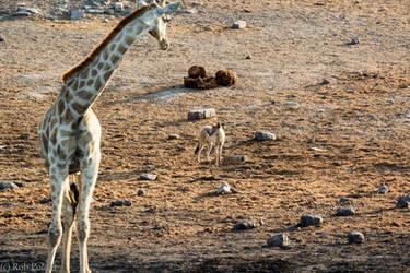 species meeting I