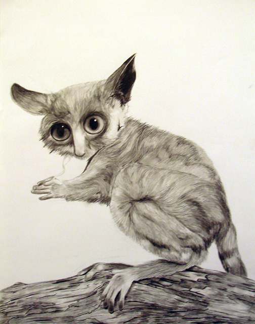 how to draw a bush baby