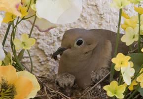 Mother Dove by CoryAmedia