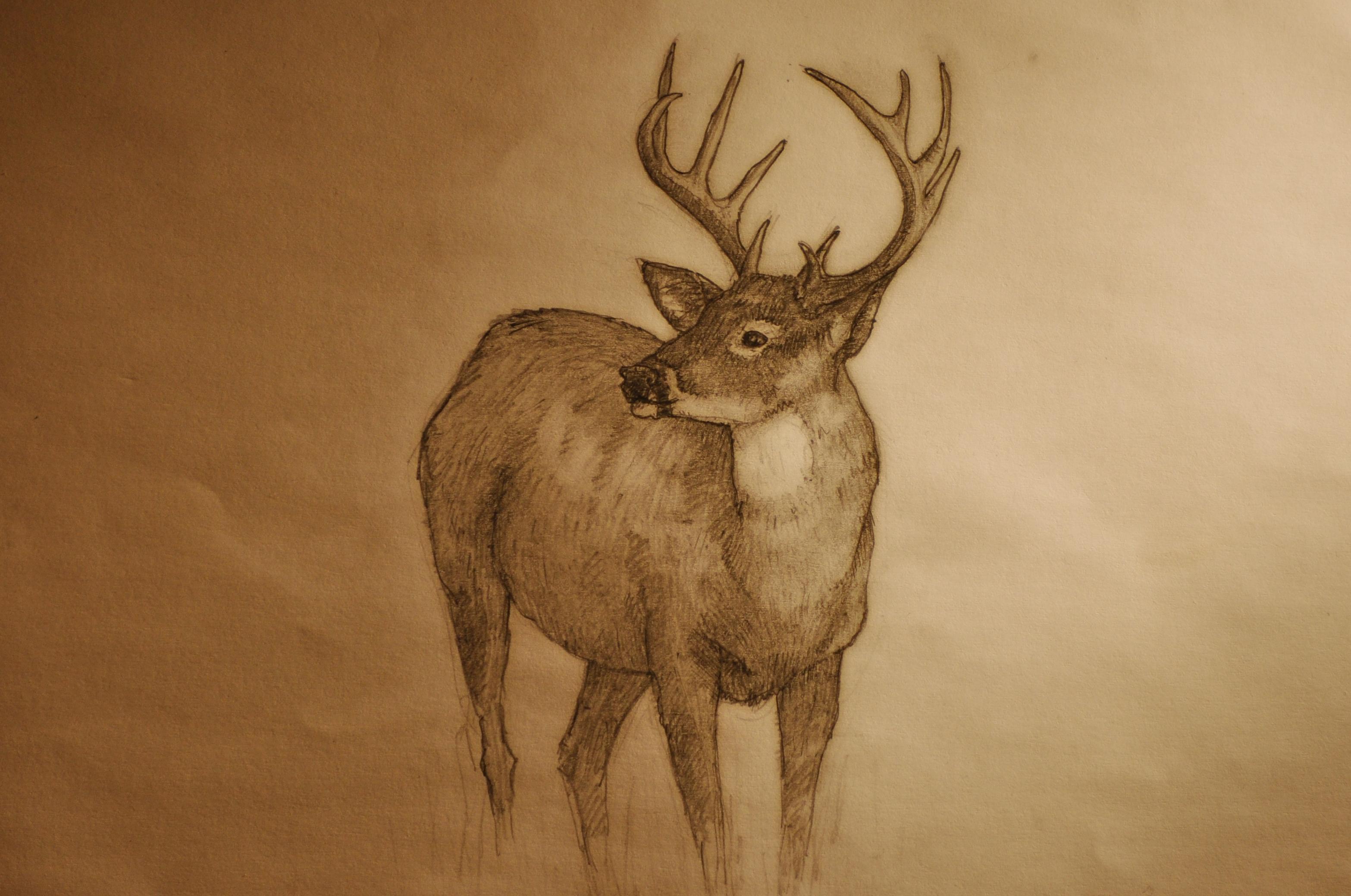 deer drawings - photo #17