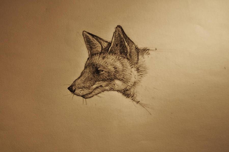 Simple Fox Drawing Fox Drawing by Noppanloppan