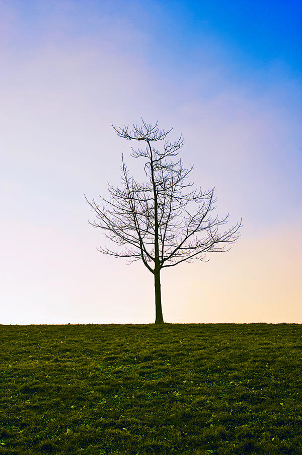 Lonely tree by melilolo