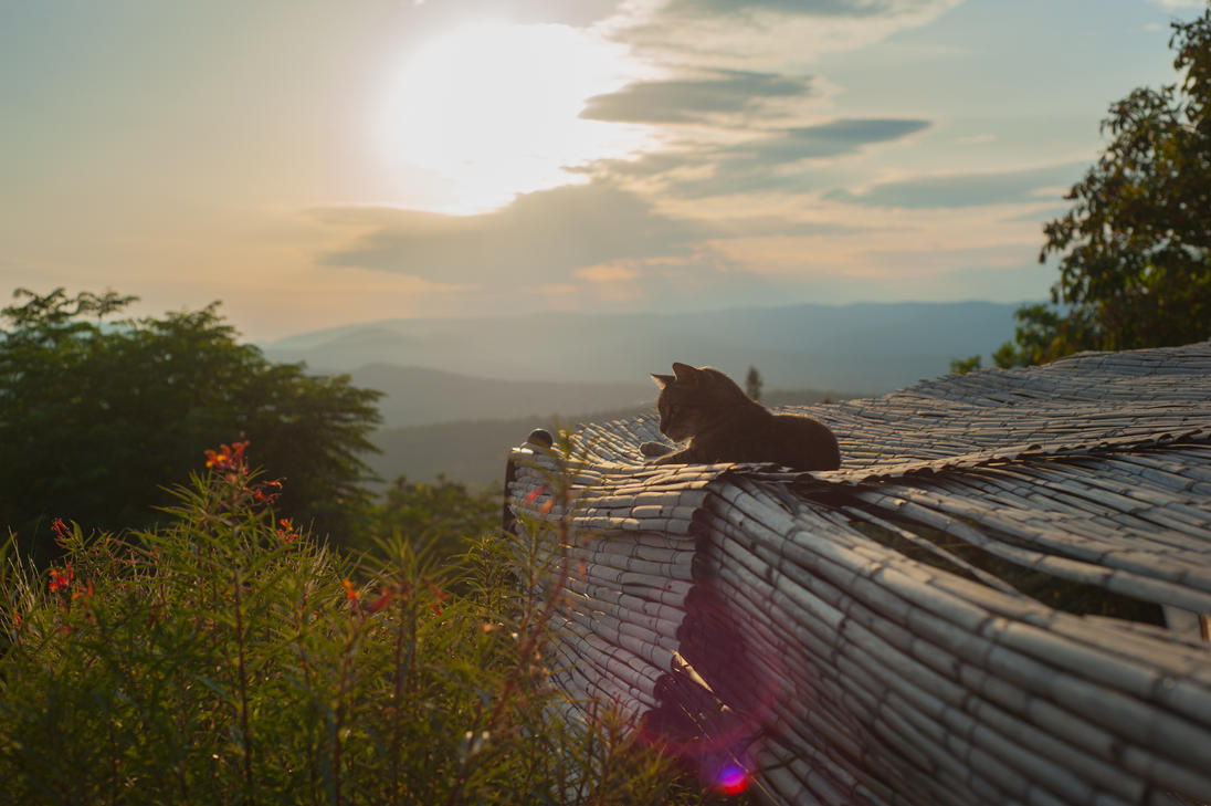 cat on the roof by melilolo